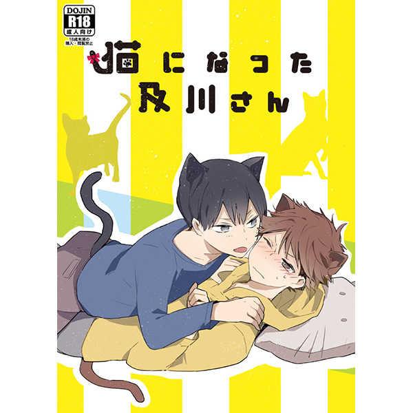 猫になった及川さん [少年H(ゆうき)] ハイキュー!!