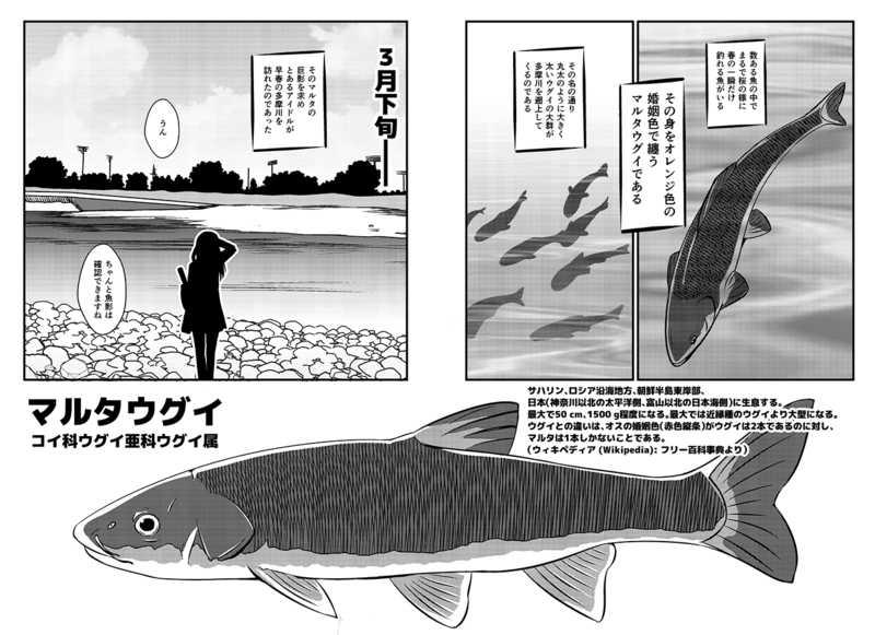 藤原肇 世界を釣る! 多摩川のマルタウグイ編