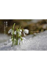 春待ちスノードロップ