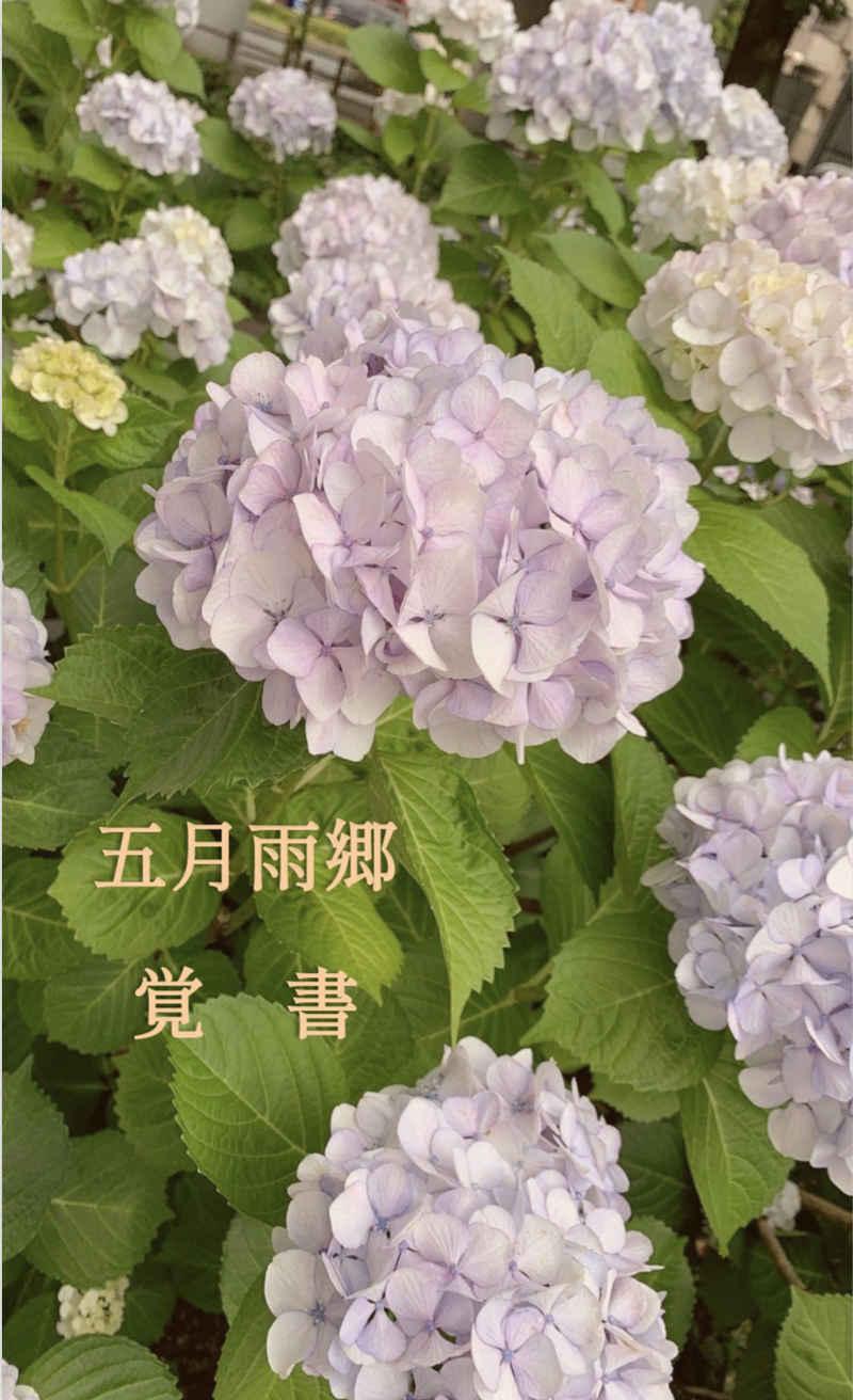 五月雨郷覚書 [活魚水族館(まぐろ)] 刀剣乱舞