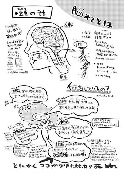 みんなのための解剖生理