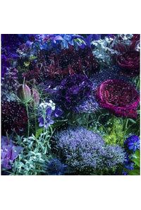 (CD)「夏雪ランデブー」エンディングテーマ あなたに出会わなければ~夏雪冬花~/星屑ビーナス