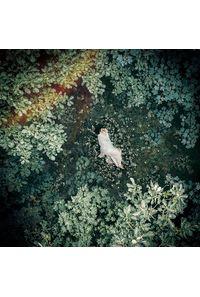 (CD)「7SEEDS」オープニングテーマ収録 スターライトキセキ/Ark(初回限定盤B)/天月-あまつき-